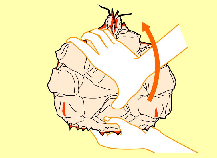 甲羅を開ける