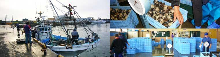 北海道苫小牧漁港 北寄漁の様子