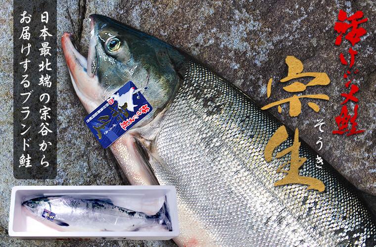 宗谷産活ジメ鮭「宗生」(4.0kg以上)