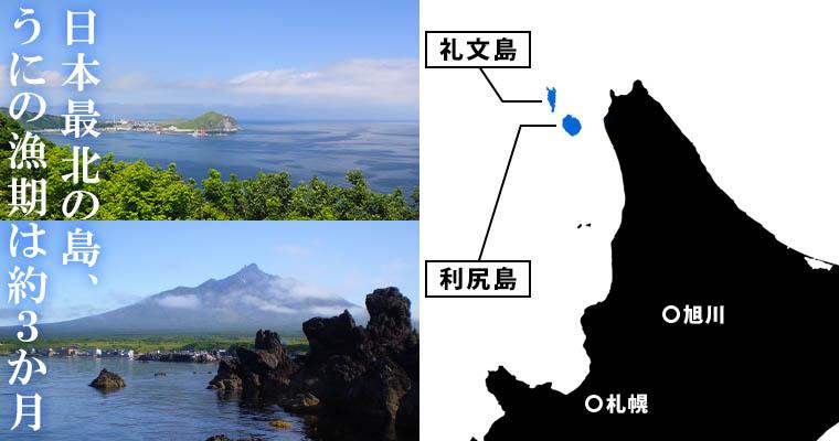 日本最北の島、うにの漁期は約3ヶ月