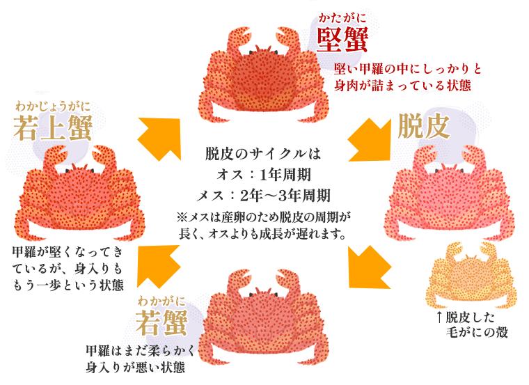 堅蟹の説明イメージ