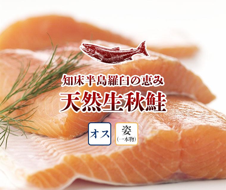 羅臼産天然生秋鮭