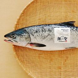 日高のブランド秋鮭「銀聖」