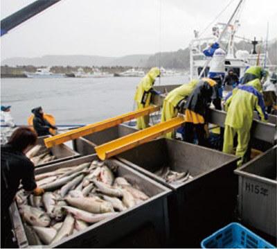 ウトロの鮭漁の様子