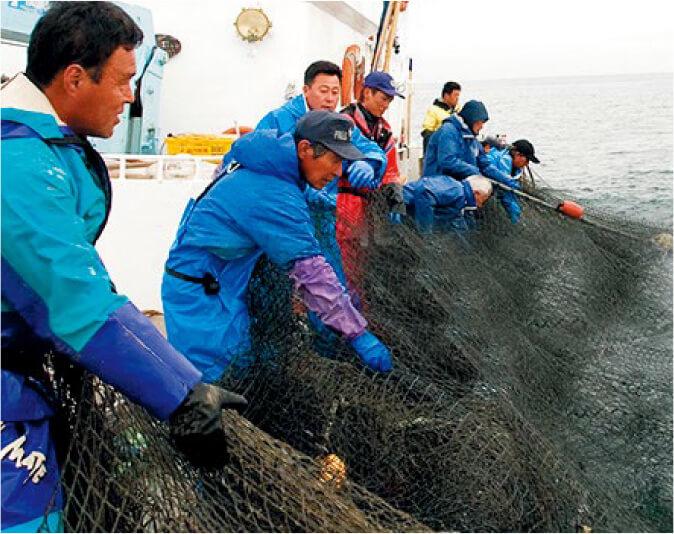 秋鮭 定置網を上げる様子