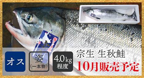 宗谷産生秋鮭(オス・姿/4.0kg程度)税込9,800円