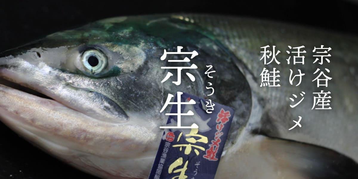 宗谷産秋鮭